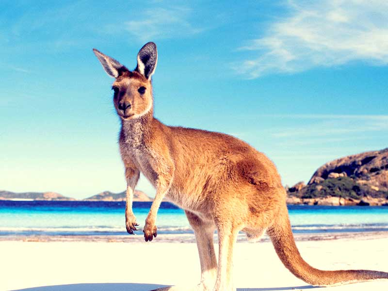 Resa till Australien - Destination Australien