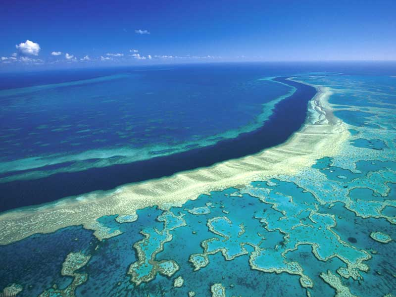 australien stora barriärrevet