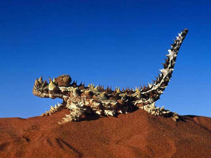 Vaccinering inför resa till Australien - Destination Australien